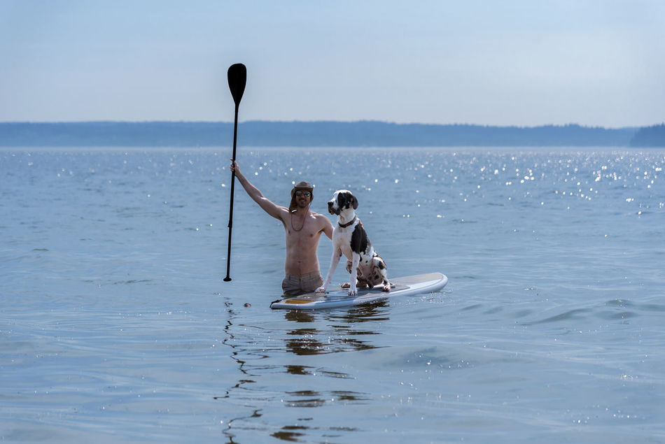 Man teaching Harlequin Great Dane dog how to use a standup paddle board in gorgeous blue water. Arm Raised Beauty In Nature Blue Day Friends Great Dane Harlequin Lake Leisure Activity Mammal Men Nature Outdoors Paddle Board People Real People Sea Sea And Sky Sky Standup Teaching Togetherness Training Triumph Water