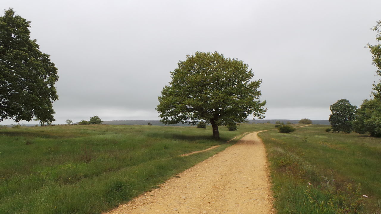 Camino CaminodeSantiago El Camino De Santiago Jakobsweg Road Straße Track Way Way Of Saint James Weg