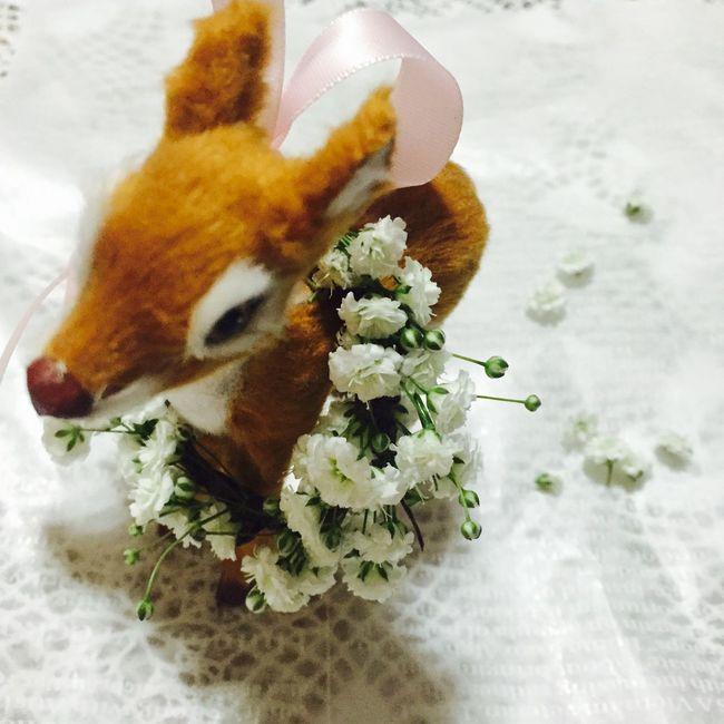 小鹿とお花 小花 ドライフラワー リース 花 Flower かすみ草 カスミソウ 小鹿 バンビ Bambi