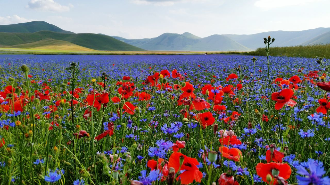 Flowers Growing In Field By Mountains Against Sky