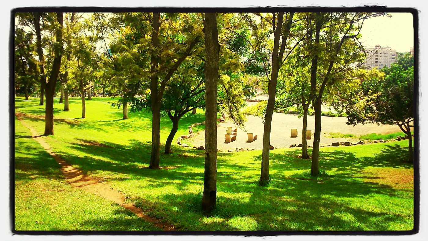 De paseo... Nature Textures Relaxing Photooftheday Park