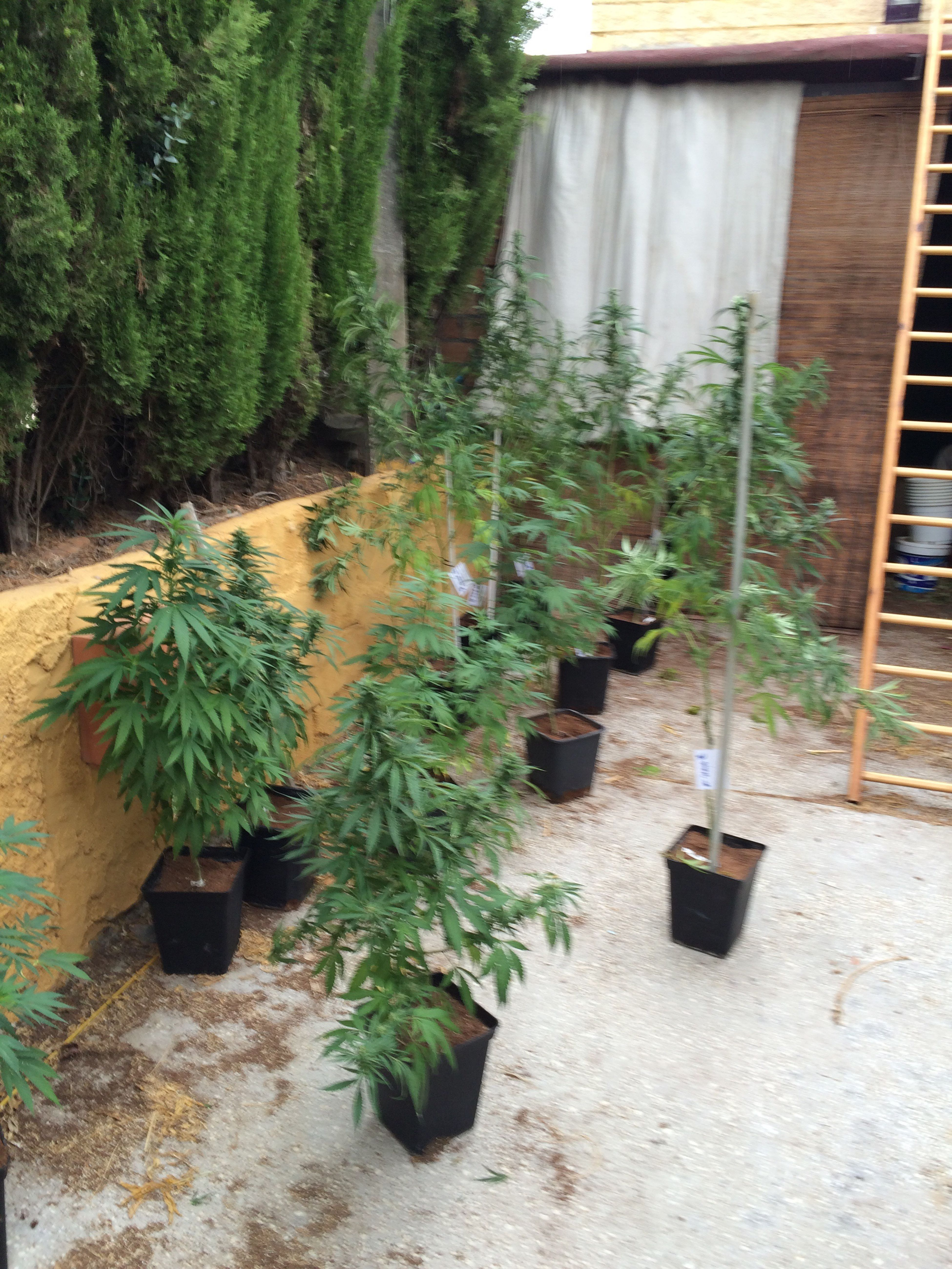 Check This Out That's Me Hanging Out The Things I Love Legalgrow Cbd Shark Cannabiscommunity Highcbd Medicine