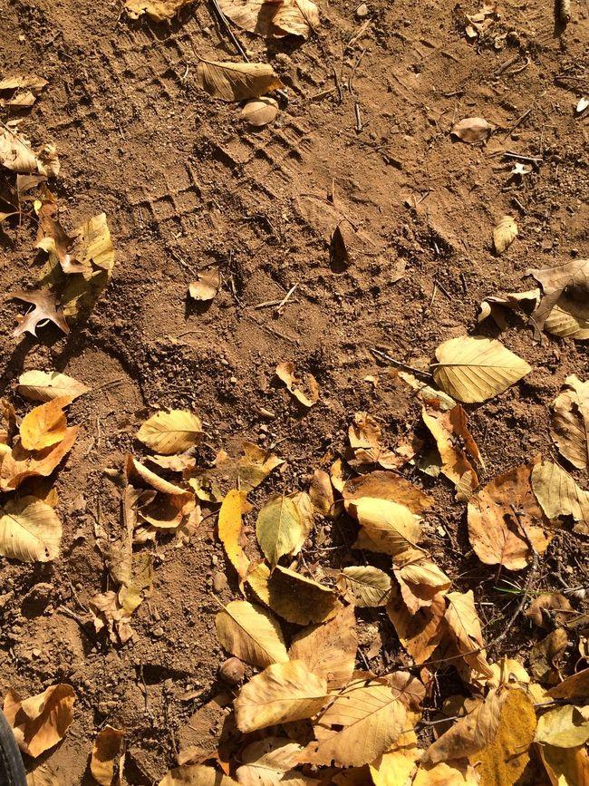 ✨🍂Autumn...on the Moon🌝 Tadaa Community Autumn Autumn Leaves Changing Seasons Taking Photos Fall Leaves