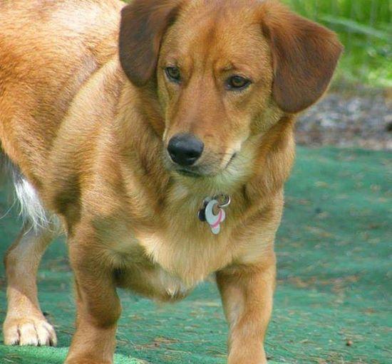 Happy Nationalpuppyday ! Henry Longlowrider AdoptDontShop Lovearescue Cutestthingon4legs Dogsofinstagram