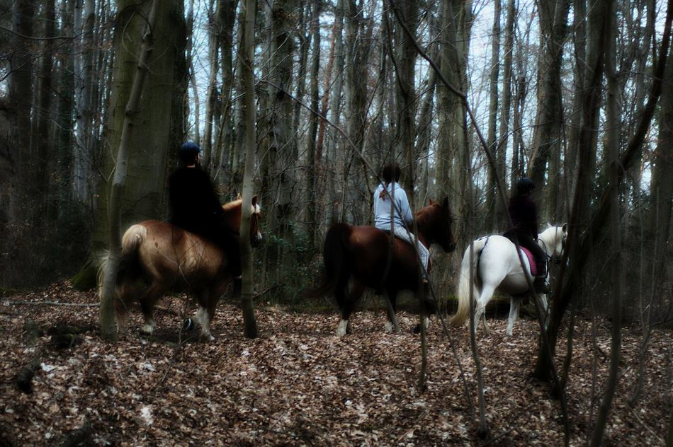 Riding Through The Woods Three Girls On Horse Back Horse Pony Bare Trees Cold Days Brown Leaves No Sunshine Tree Animal Themes Forest View Cityforest Nature Beauty In Nature