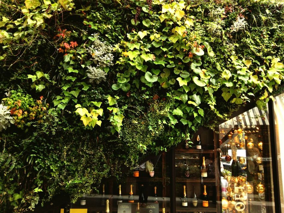 Wall greening Wall Green Leaf Plant Vine Building Exterior Green Color Kobe,japan
