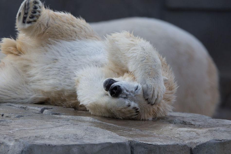 Beautiful stock photos of baer, no people, stuffed toy, polar bear, mammal