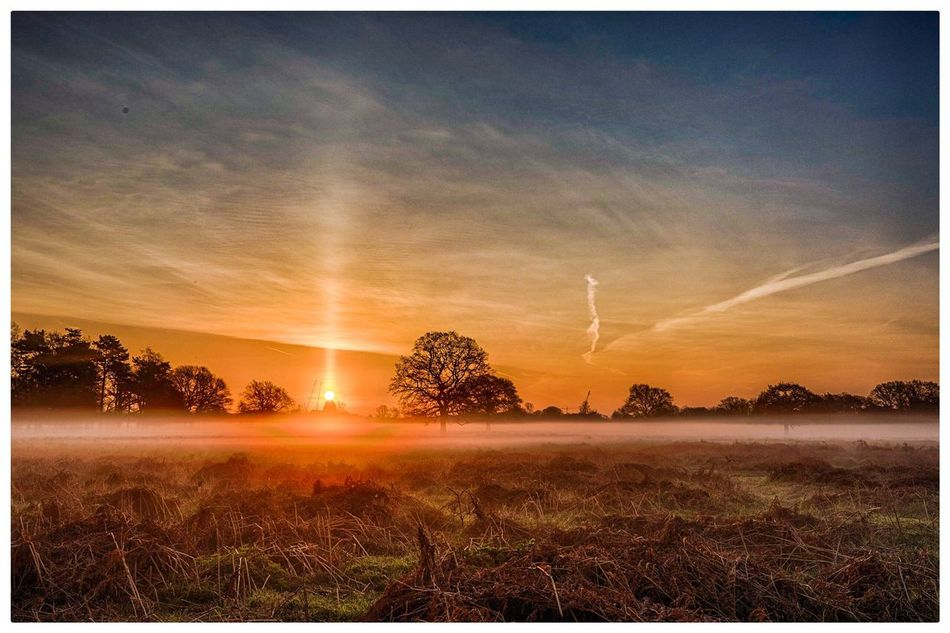 Sun pillar during this morning's misty sunrise Sunset Nature Beauty In Nature Scenics Tree Field Landscape No People Outdoors Sky Sun Grass Day Sun Pillar Mist Weather Pro: Your Perfect Weather Shot  Weather Photography Weather Phenomenon Sunrise_sunsets_aroundworld Sunrise_Collection