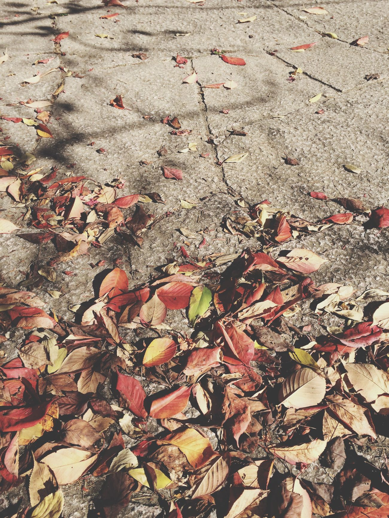 Autumn Leaves Fallen Leaves