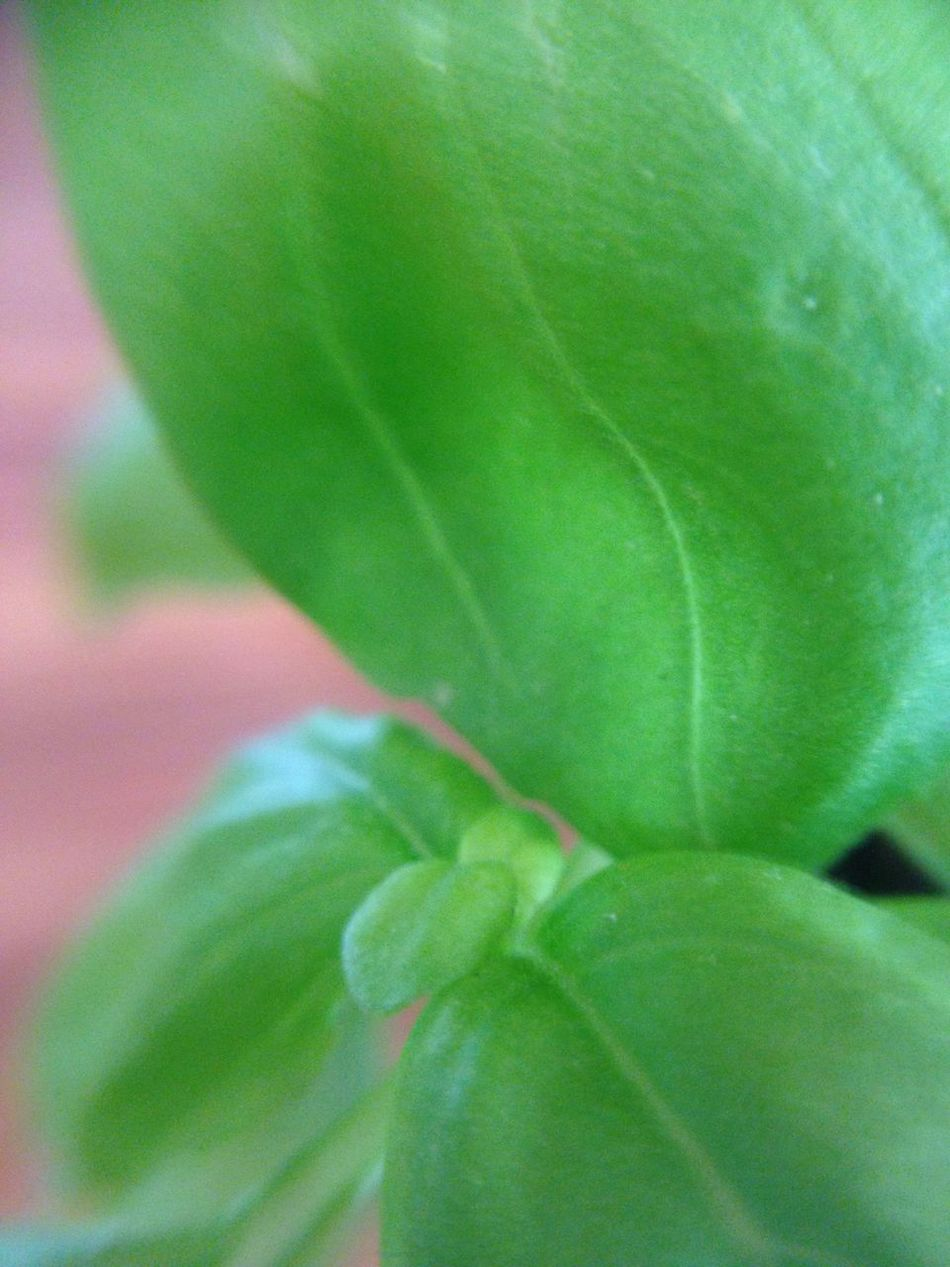 Leaf Growth Green Color Close-up Nature No People Plant Day Outdoors Beauty In Nature Freshness Fragility Springtime Summer