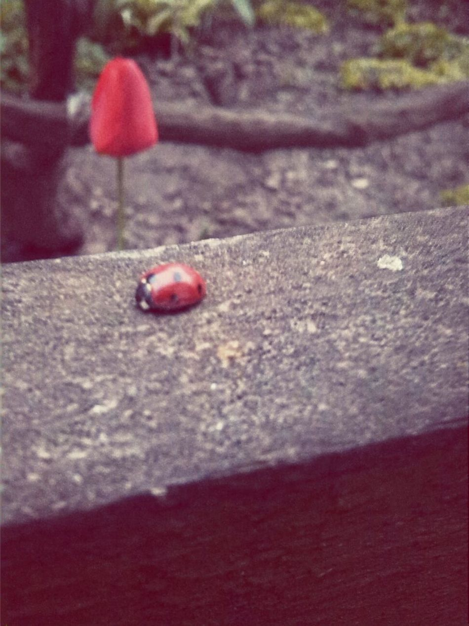 Ladybag Spring Time Natural