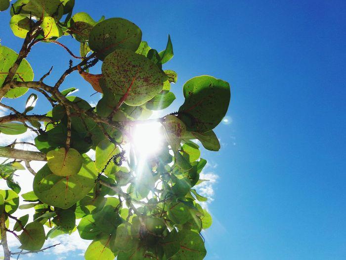 Flair Leaves Honduras Sun Light Rays Of Light Sky