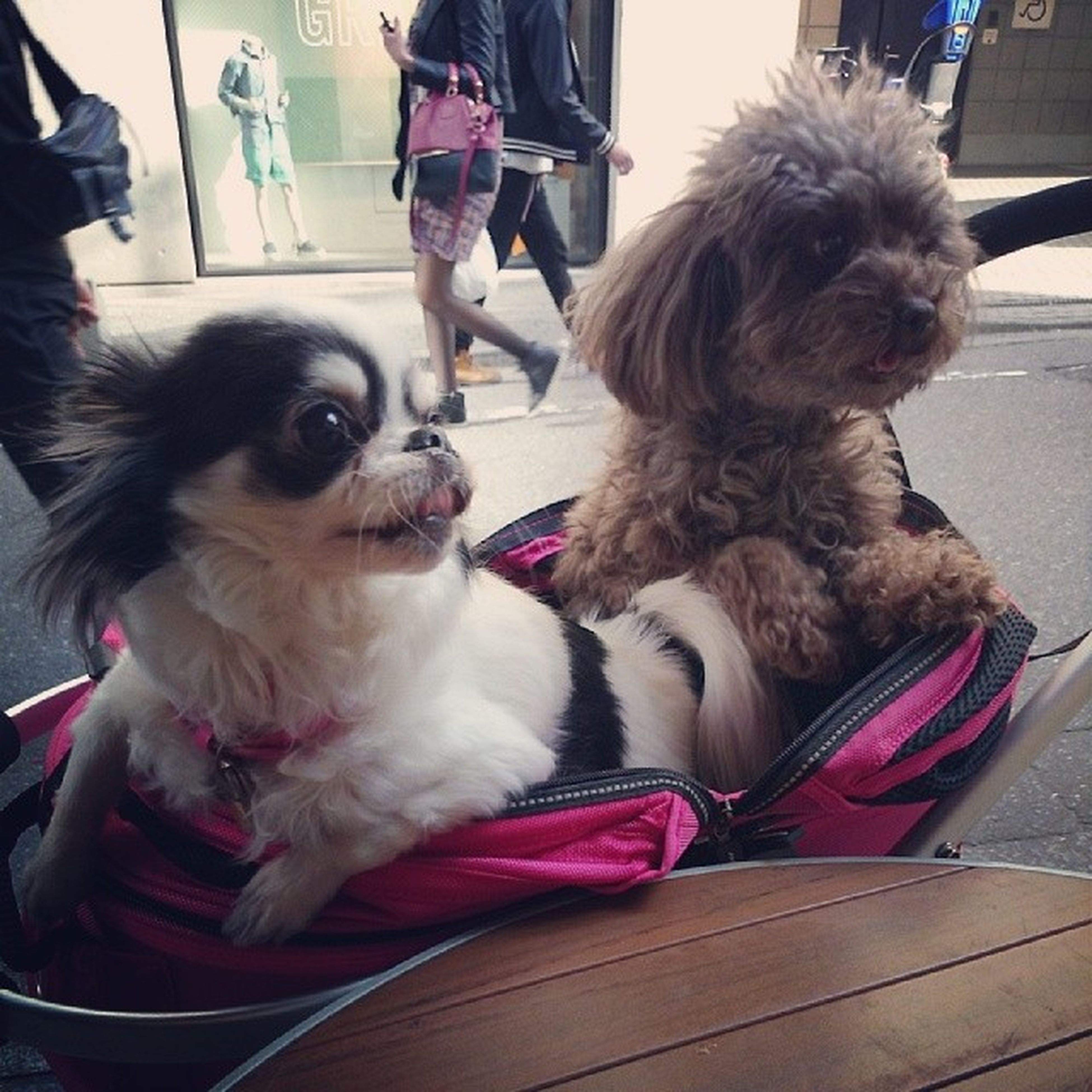 pets, domestic animals, dog, animal themes, one animal, mammal, sitting, transportation, pet owner, indoors, two animals, car, mode of transport, pet leash, land vehicle, incidental people, pampered pets, pet collar
