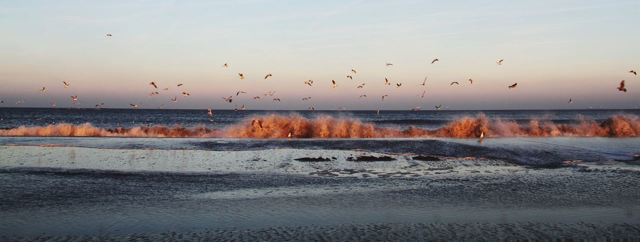 water, large group of animals, sunset, nature, motion, beauty in nature, flying, sky, bird, animals in the wild, flock of birds, no people, animal themes, outdoors, animal wildlife, migrating, scenics, sea, spread wings, day