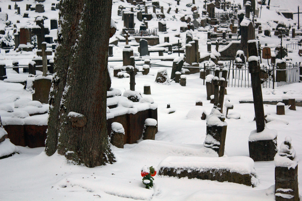 Cold Temperature Day Flower Graveyard Graveyard Beauty Nature No People Outdoors Peaceful Snow Winter