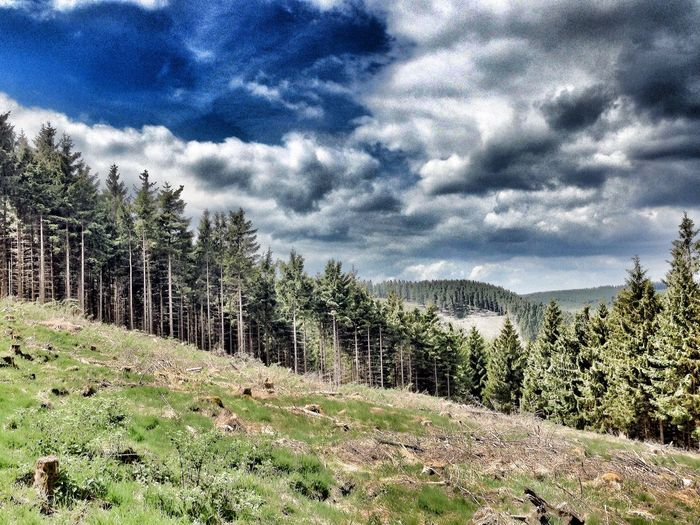 Downhill Walking Around Taking Photos Rothaarsteig Sauerland Eye Em Nature Lover Cloud_collection  IPhoneography OpenEdit