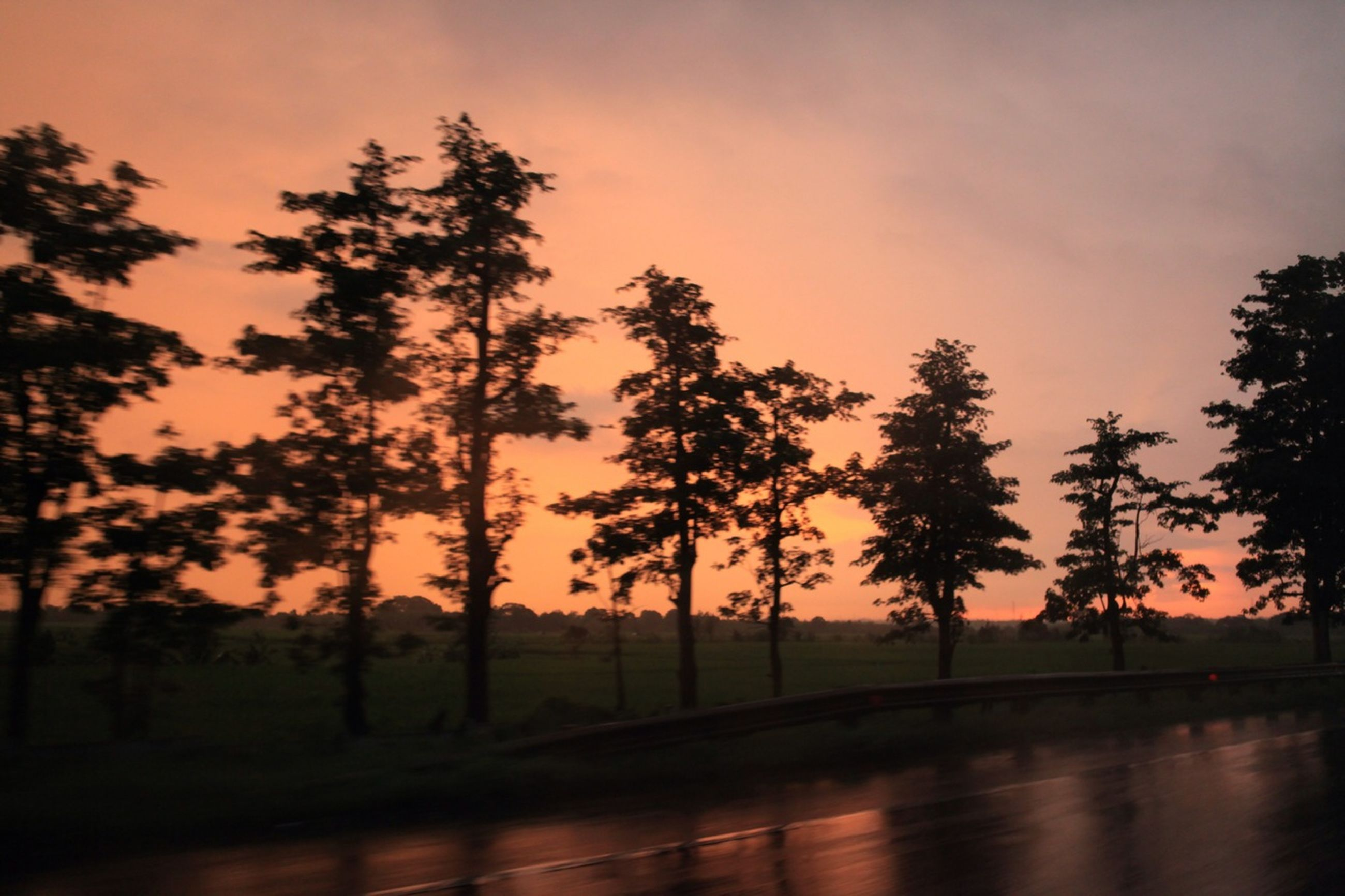 tree, sunset, silhouette, tranquility, tranquil scene, sky, beauty in nature, scenics, nature, growth, palm tree, landscape, idyllic, orange color, road, sun, outdoors, no people, field, sunlight