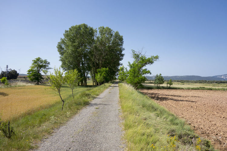Barracas Beauty In Nature Blue Castellón Clear Sky Day Dirt Road Grass Green Color Landscape Nature No People Outdoors Road Rural Scene Scenics Sky The Way Forward Tree València
