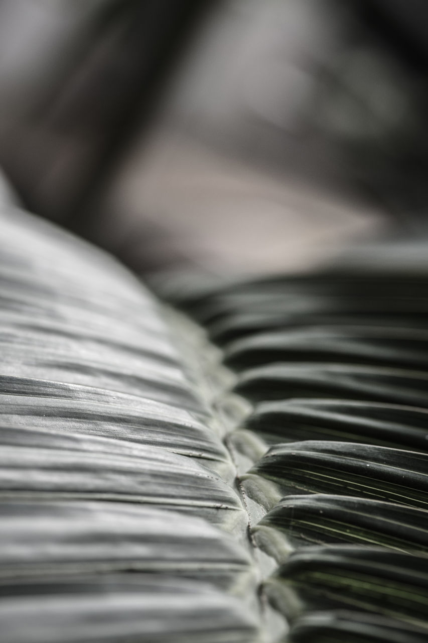 selective focus, no people, close-up, backgrounds, indoors, day
