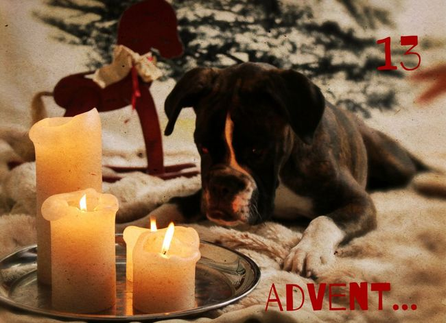 Türchen 13 Juno's Adventskalender Juno's World For My Friends That Connect Boxer Enjoying Life