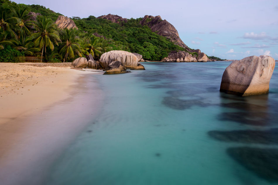 Animal Themes Beach Day Daydream Domestic Animals La Digue Mammal Nature No People One Animal Outdoors Pets Sand Sea Seychelles