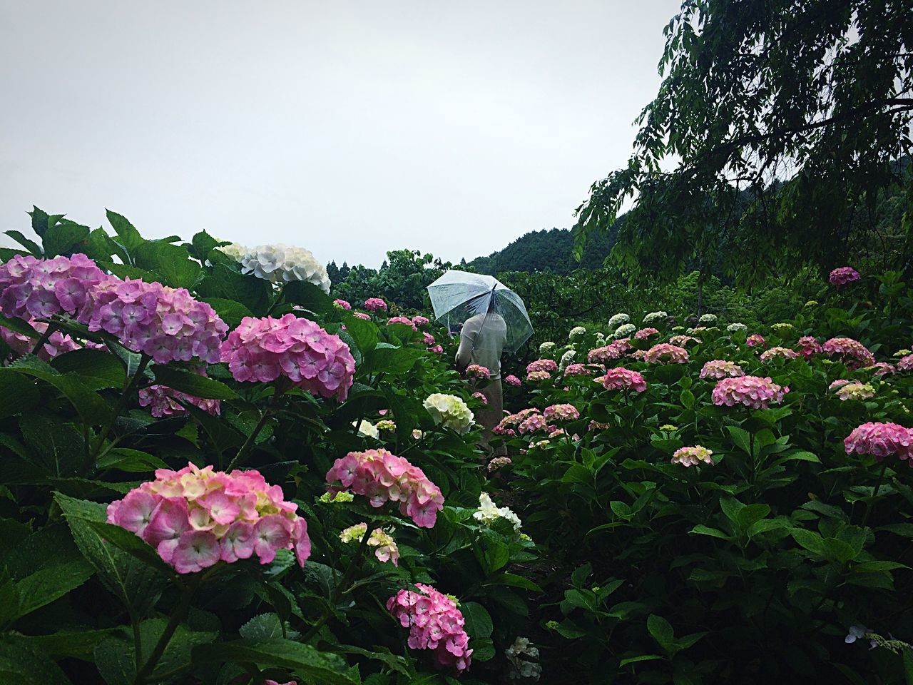 Beautiful stock photos of umbrella, Beauty In Nature, Day, Field, Flower