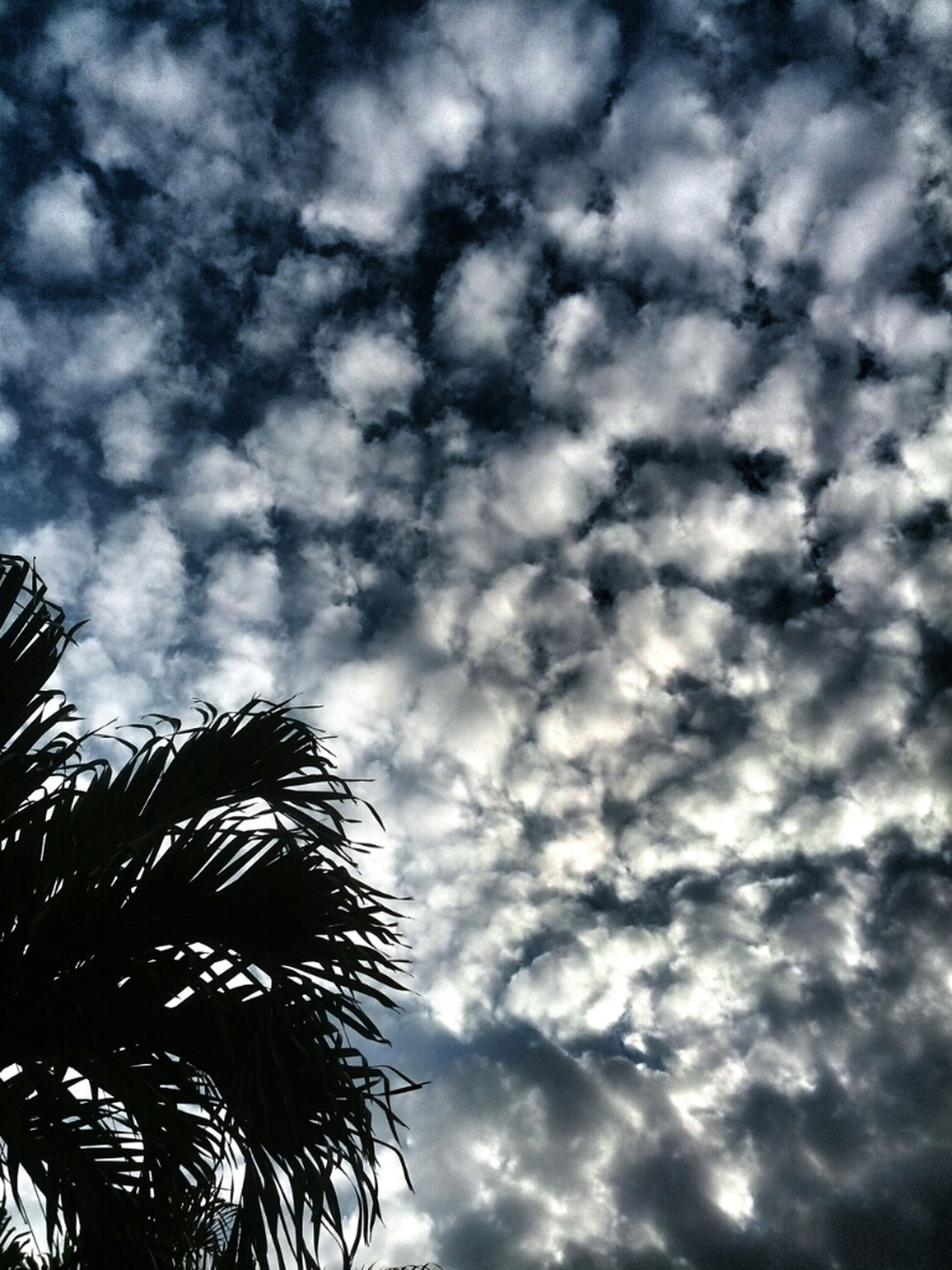 low angle view, sky, cloud - sky, palm tree, cloudy, tree, nature, cloud, growth, beauty in nature, tranquility, scenics, silhouette, outdoors, overcast, day, no people, high section, tranquil scene, weather