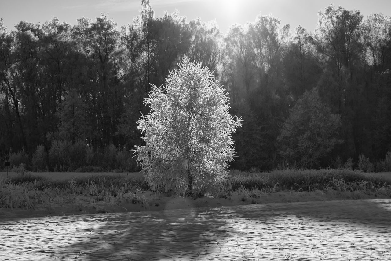 Enlightened (bnw version) - Beauty In Nature Black & White Black And White Branch Day Enlight Exceptional Photographs EyeEm Best Shots - Black + White EyeEm Masterclass First Eyeem Photo Hello World Idyllic Landscape Nature Nature No People Outdoors Scenics Sunlight The Week Of Eyeem Tranquil Scene Tranquility Tree Water Winter