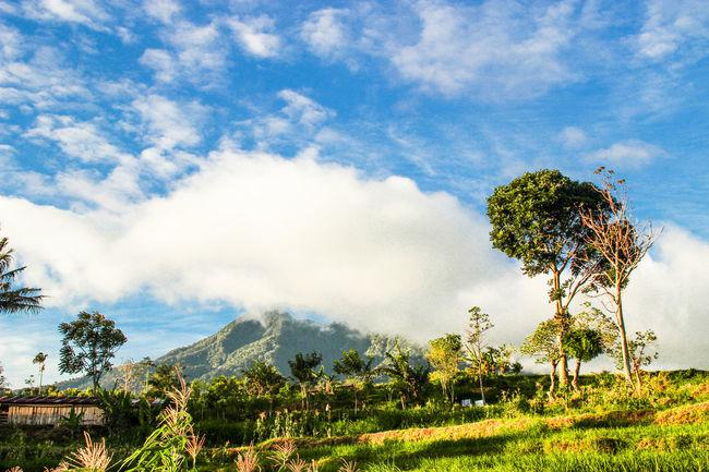 Landscapes With WhiteWall EyeEm Indonesia Indonesia_photography Indonesia_allshots Sumateta Barat Minangkabau Rancak Gunung Tampak Menjulang,Sawah Ladang Membentang sungguh kubangkan EyeEm Best Shots - Nature Mountains And Sky Clouds And Sky Blue Sky