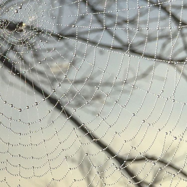 Wet Web From Where I Stand Great Light EyeEm Nature Lover Check This Out From My Point Of View Capture The Moment Eye4photography  Ladyphotographerofthemonth Showcase: November