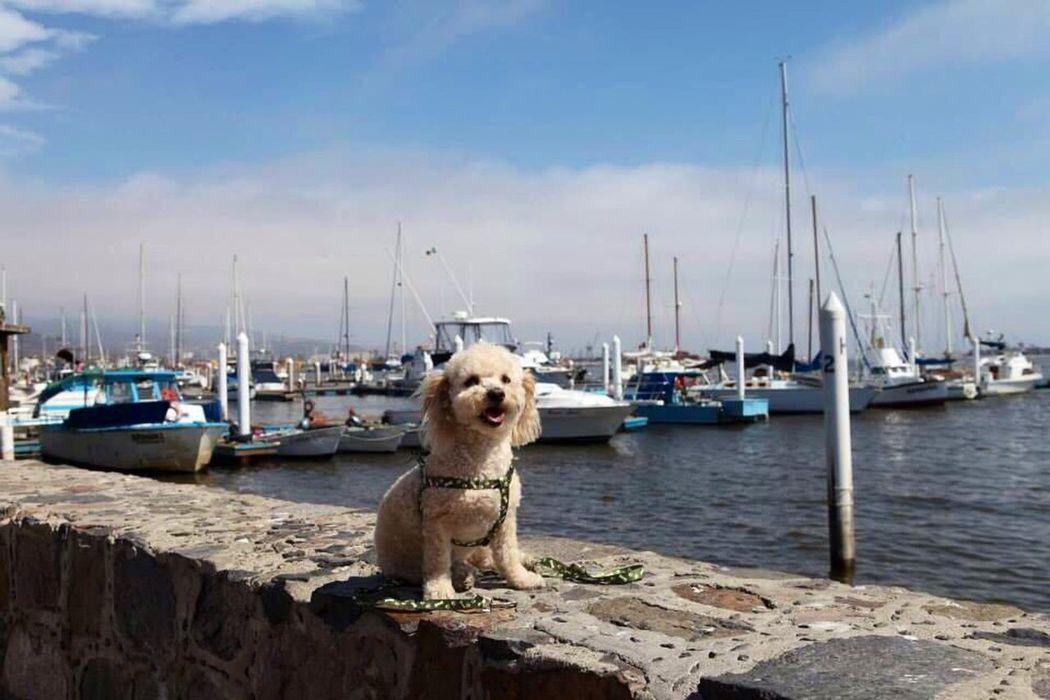 Doky en Sídney:-) Happy Dog Sidney My Beautiful Dog Sea