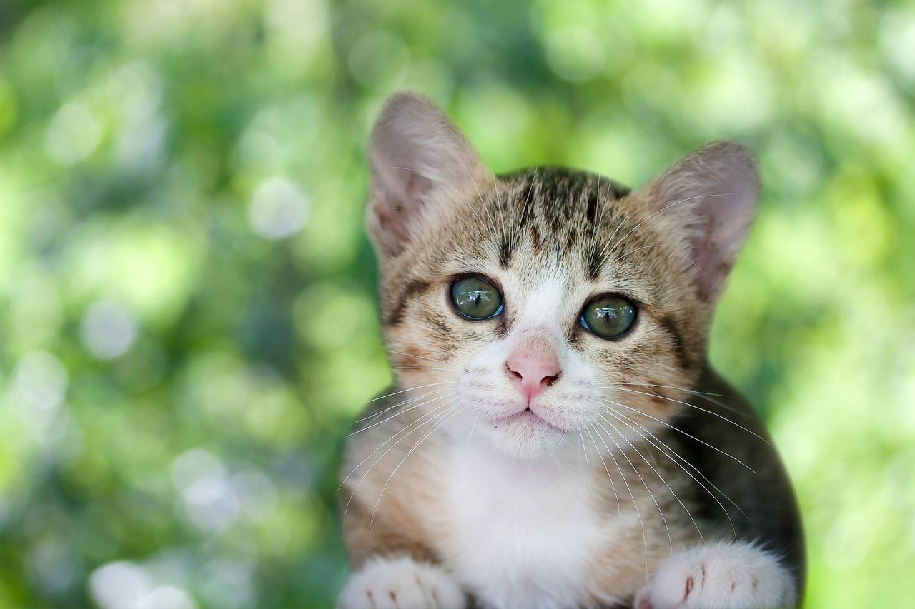 Cute cat or kitten on green bokeh background Cat Cats Kitten Kitty Kittens Pets Pet Cute Pets Bokeh Green