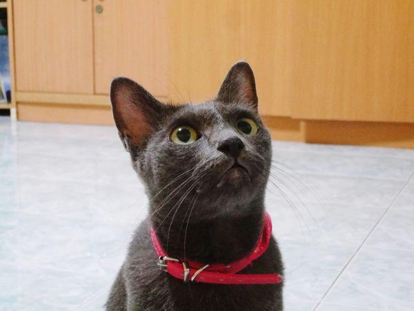 Cat Kitty Kitty Cat Thecat
