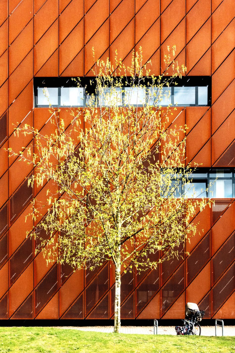 colors... Spring Red Green Adapted To The City Built Structure Building Exterior Architecture Growth Tree City No People Nature Leaf Outdoors Freshness Day Fragility