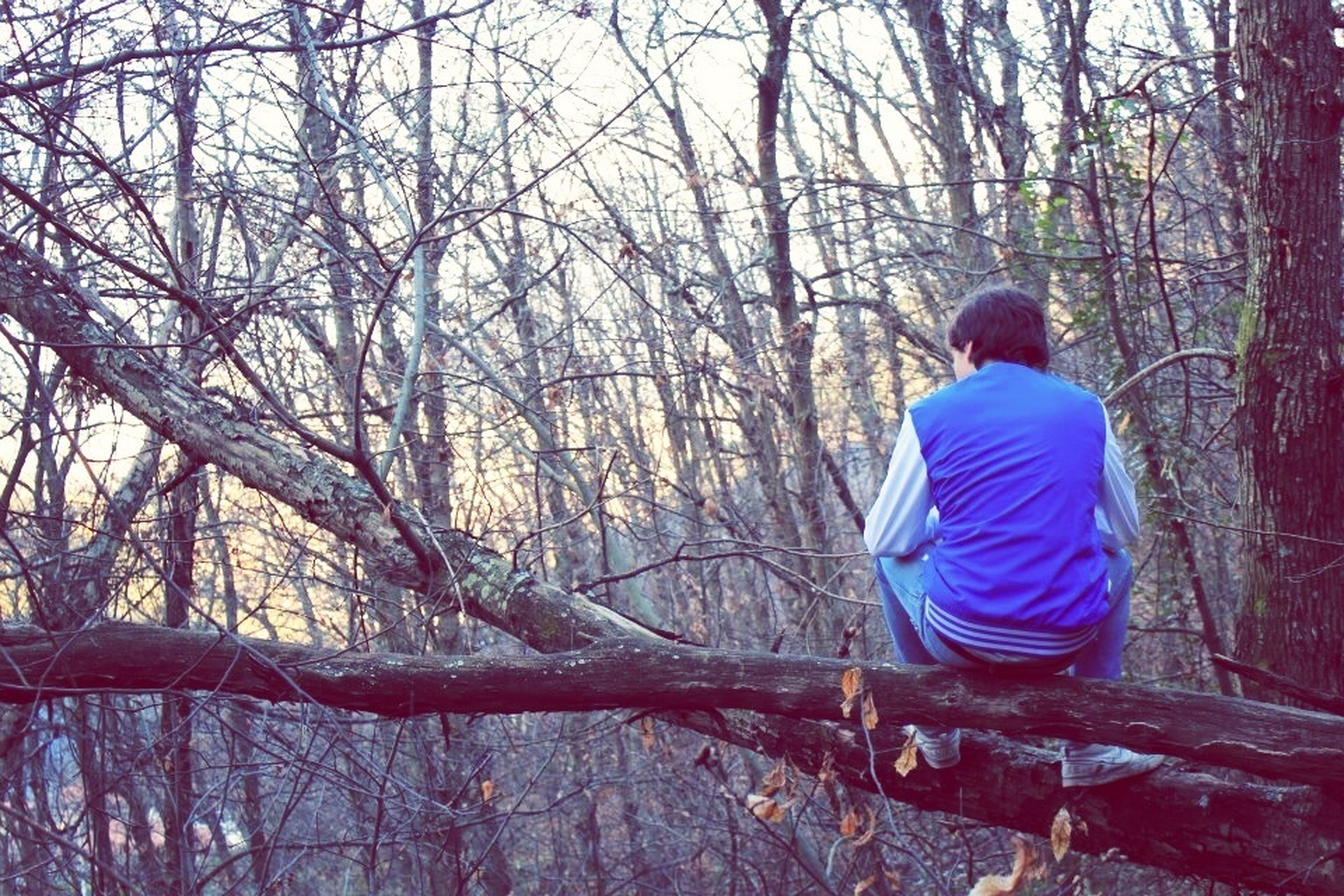 tree, bare tree, leisure activity, lifestyles, rear view, full length, branch, tree trunk, men, tranquility, casual clothing, standing, nature, sitting, tranquil scene, beauty in nature, forest, three quarter length