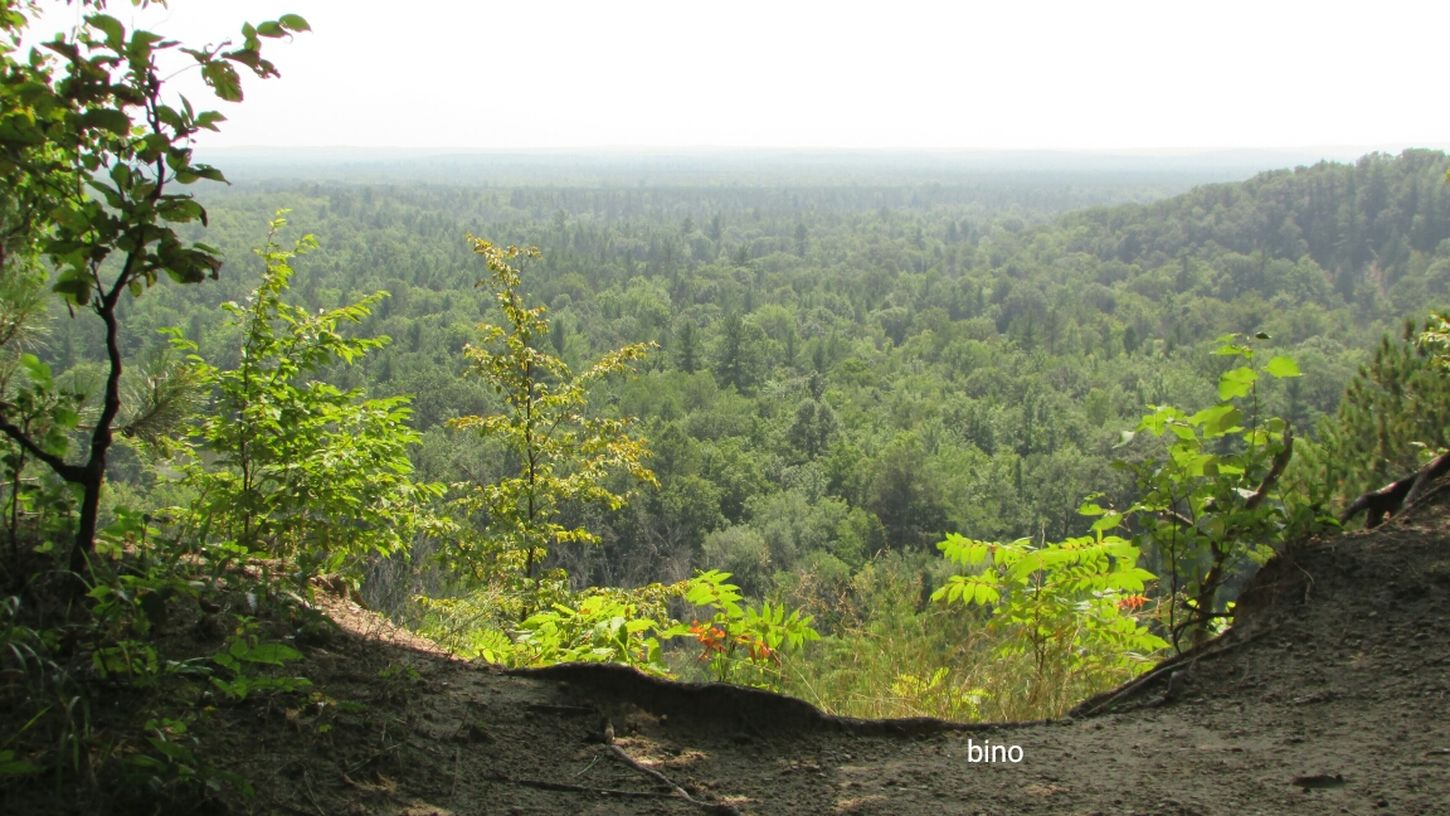 Family Fun Day  Landscape Manistee Lookout Green Color Beauty In Nature Amazing View Very High Manistee, Michigan