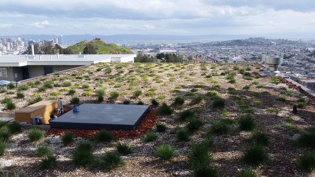 Adapted To The City Rooftop Garden Architecture Building Exterior Built Structure Sky City Growth House Nature No People Roof Mountain Modern Water Tree Cityscape Beauty In Nature Cloud - Sky Renewable Energy Alternative Energy Outdoors San Francisco.