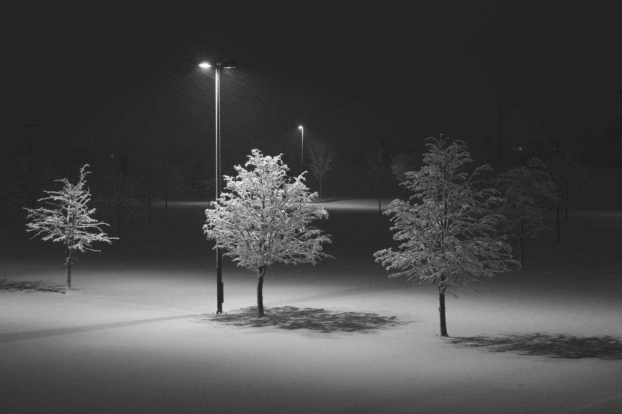 monochrome Japan Tree night Winter illuminated snow cold temperature Nature