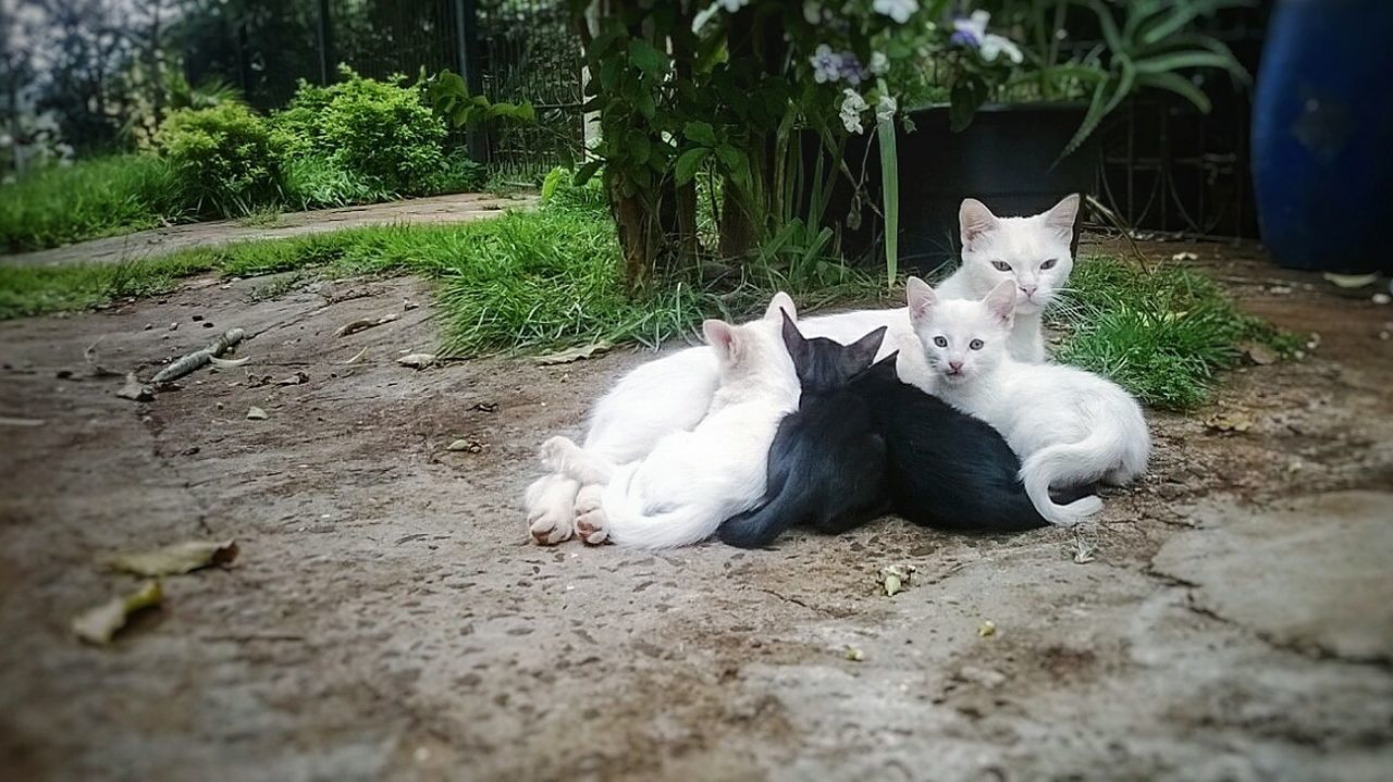 Animal Themes Domestic Animals Pets Relaxation Mammal Domestic Cat No People Day Nature Outdoors Togetherness