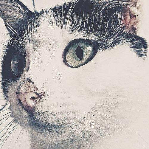 Cat Cat♡ Cat Lovers Relaxing Taking Photos That's Me Hi! Hello World Naturaleza🌾🌿 Hermoso Gatos Gatos 😍 Gatosfelizes