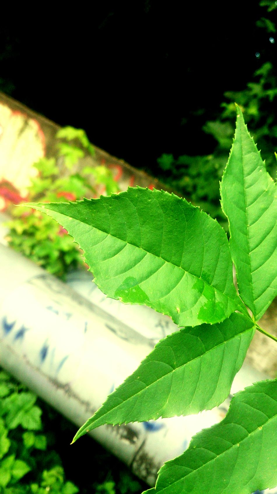 Nature Hello World Motion Blur Taking Photos Leafs Natural Beauty I Can More With Xperia Z