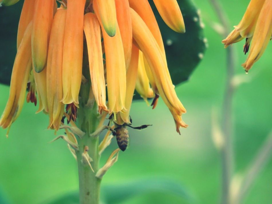 Flower Yellow Bee 🐝 Flower Head Insect Day Mexico Mexicanphotographer