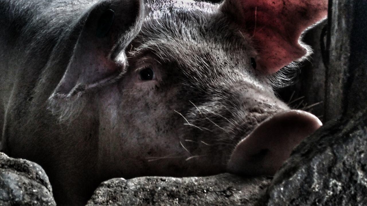 EyeEm Selects One Animal Close-up Animal Themes Nature Streetphotography Animal No People