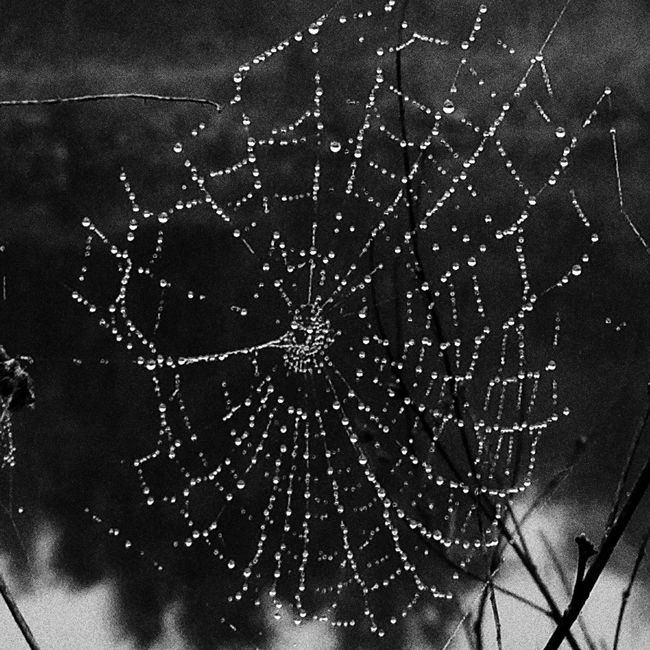 Spider Web Close-up Natural Pattern Fragility Water Selective Focus Nature Dew Complexity Beauty In Nature Focus On Foreground Freshness Outdoors Intricacy Tranquility Day Black And White Blackandwhite