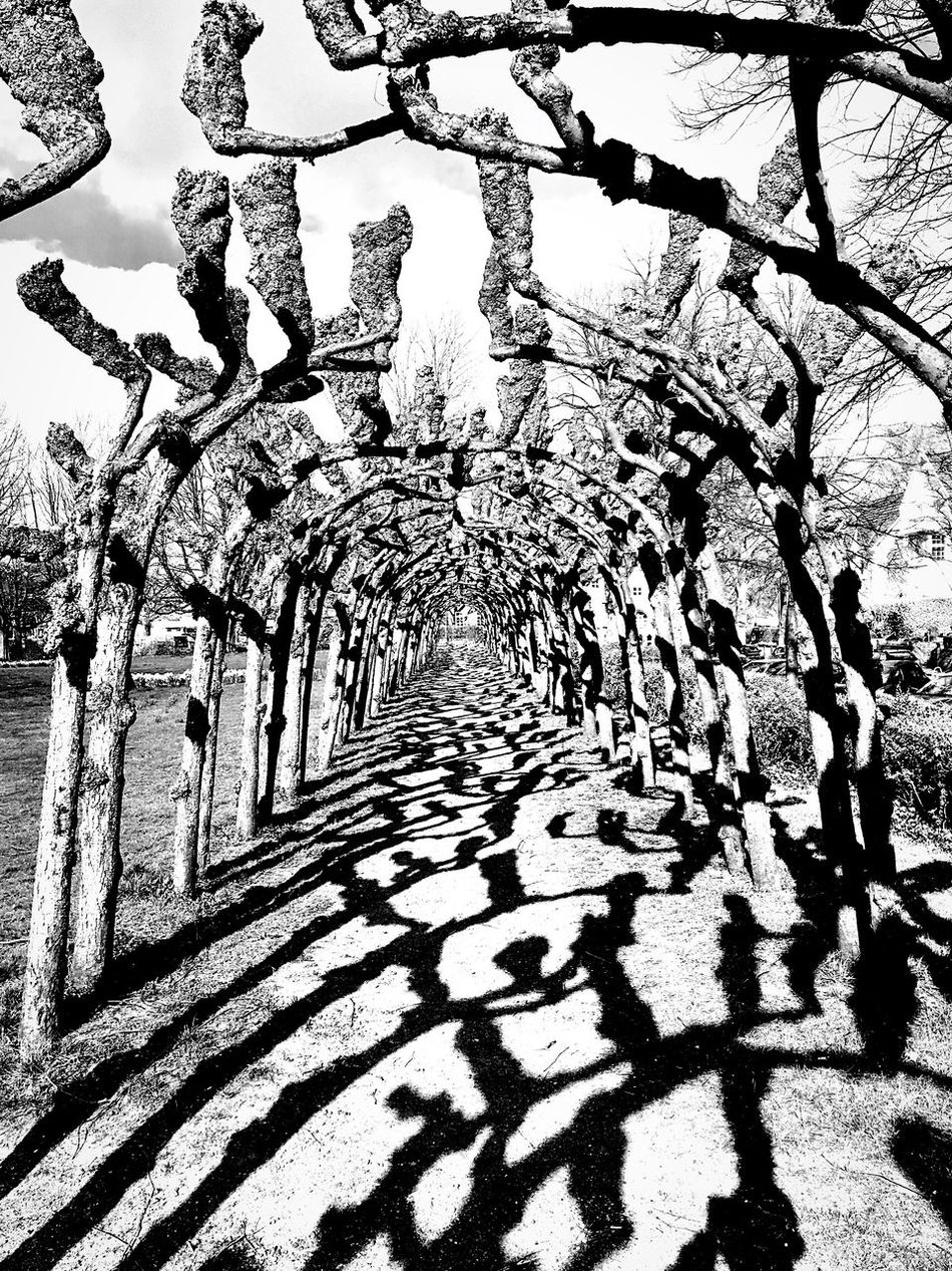 Schatten. The Way Forward Trees No People Light And Shadow Silhouette Beauty In Nature Sunlight Shadow Hamburg Hamburgmeineperle Landscape_Collection Black And White Black & White Black And White Photography Tree Bald Tranquility Scenics The Secret Spaces Pergola Park Light Landscape Nature Art Is Everywhere