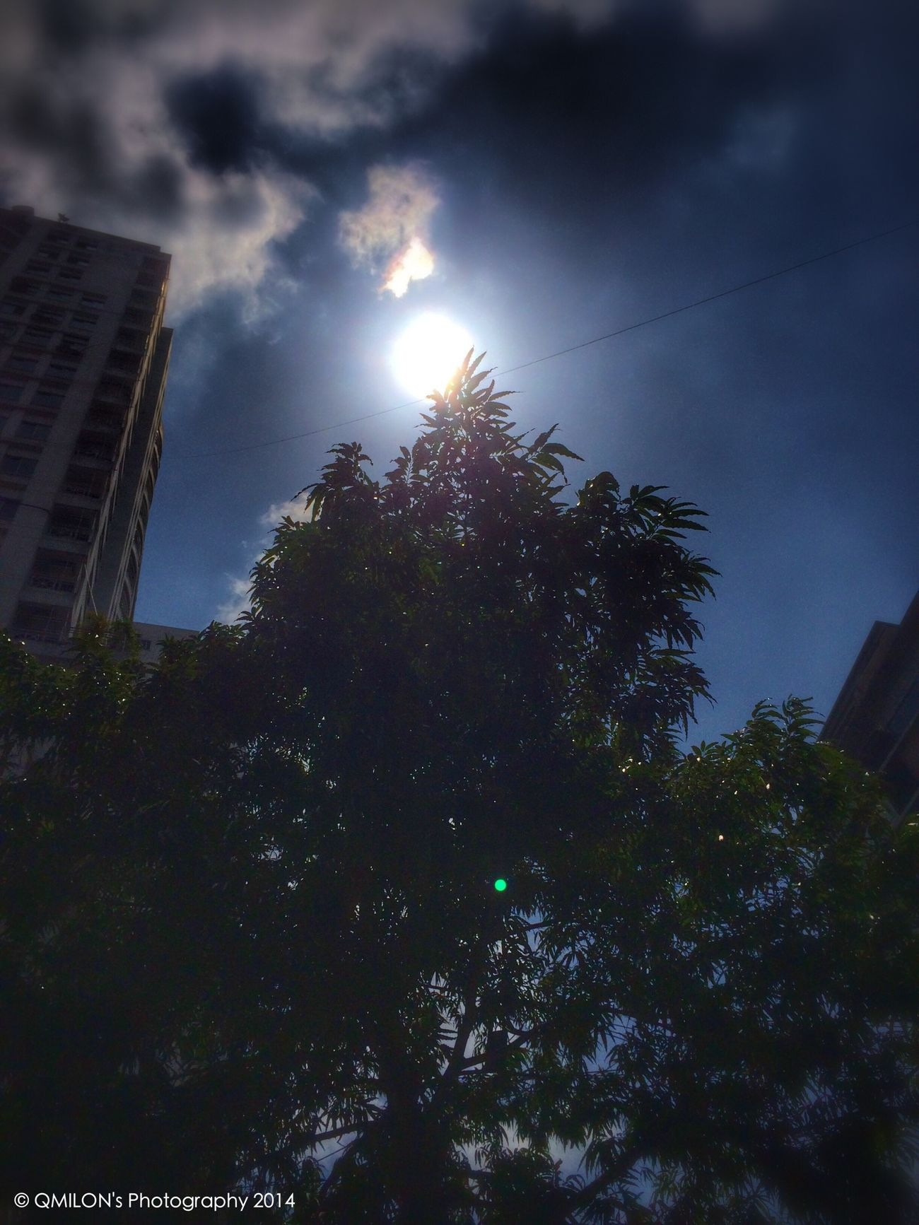 Sun_collection Tree EyeEm Nature Lover EyeEm Best Shots - Nature