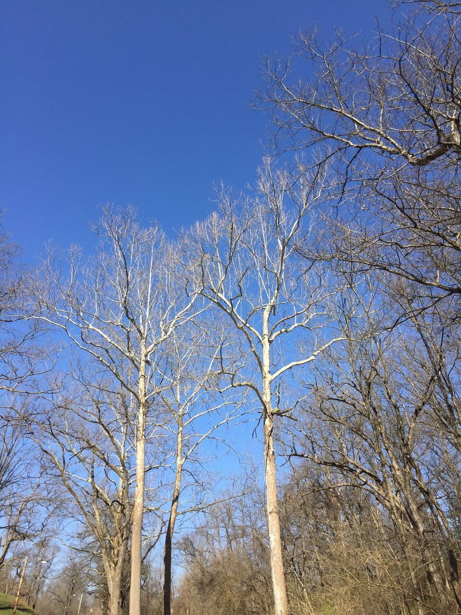 What's up Low Angle View Clear Sky Nature Blue Tree Bare Tree No People Growth Sky Outdoors Tranquility Day Branch Beauty In Nature Scenics Illinois