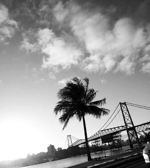 Florianópolis Landscape Pontehercílioluz Beiramar Black And White Pretoebranco