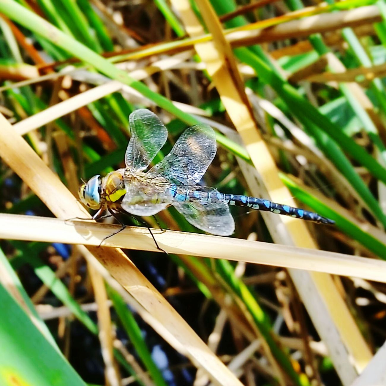 My Best Photo 2014 Dragonfly Nature Leeds To Liverpool Canal Litherland