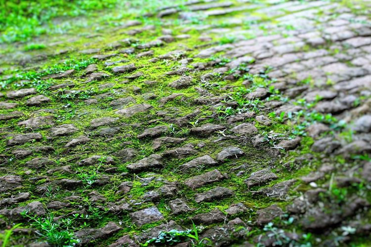 Abstract Green Alabama ForTheLoveOfPhotography Vacation Time Greenery Green Nature Growth Growing In Strange Places Brickwork  Brickroad Greencarpet Footpath Cobblestones Pathway Brick Path Historical Building Historical Site Historical Landmarks Old Path Fort Morgan History Through The Lens  Historical Place